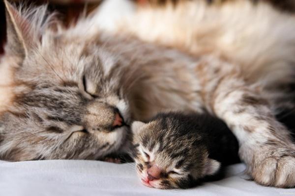 mamma gatta con il suo cucciolo