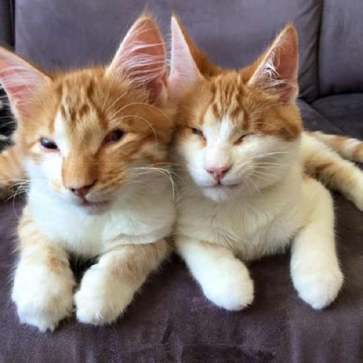 stevie isaac gatti fratelli casa
