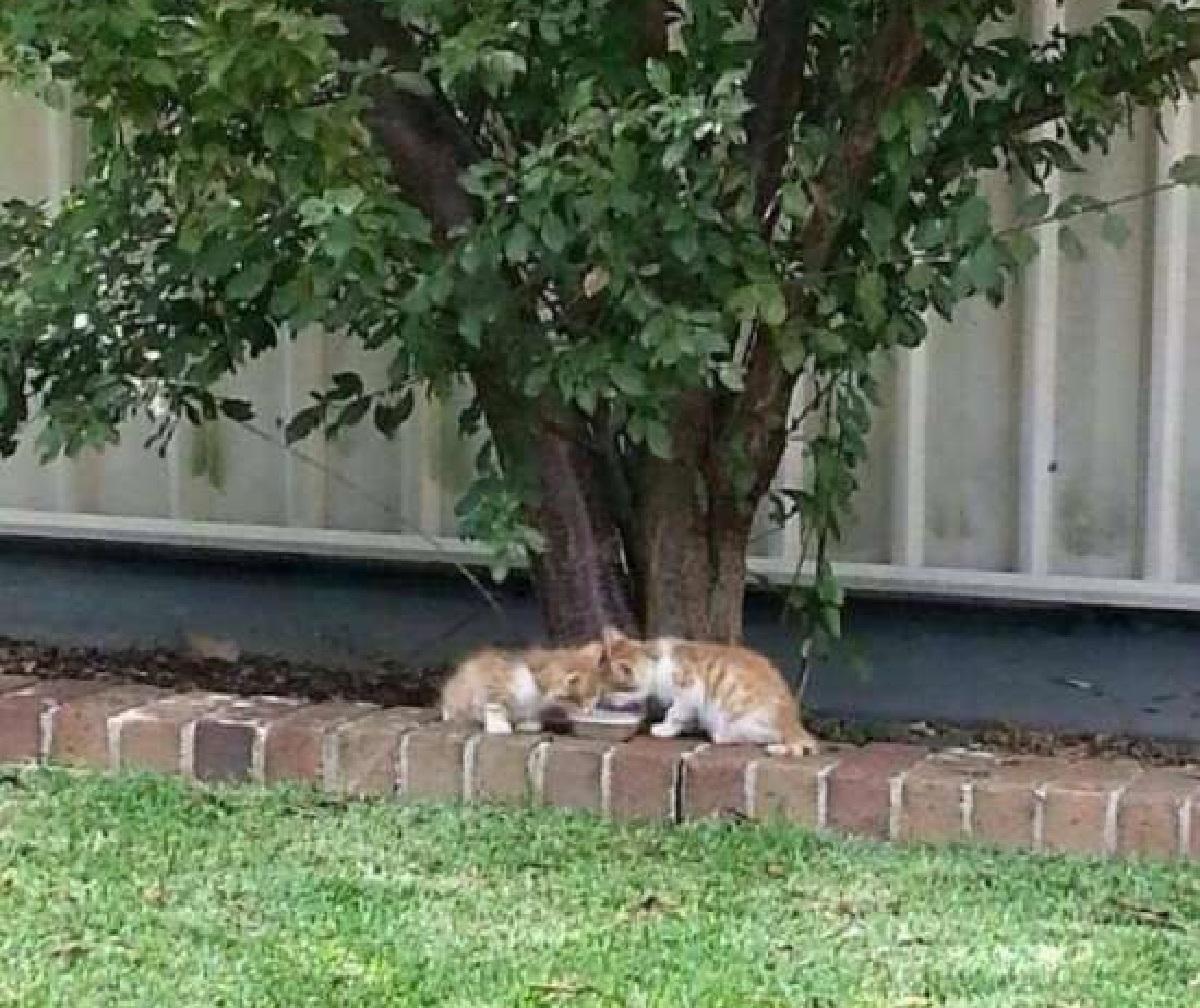 stevie isaac gatti randagi fuori giardino