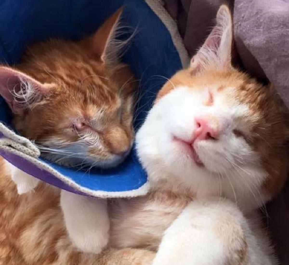 stevie isaac gatti problemi occhi