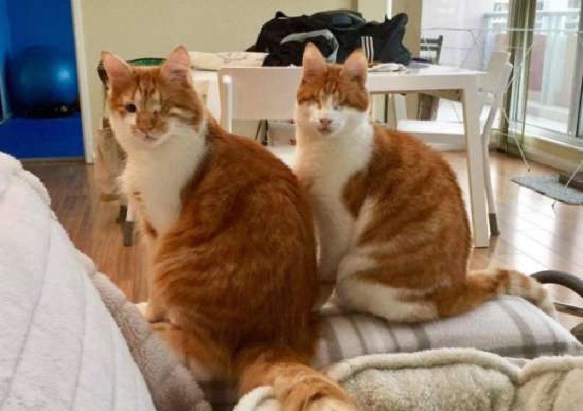stevie isaac gatti difficoltà vita