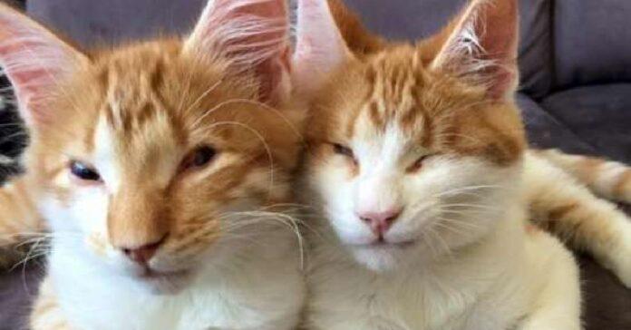 stevie ed isaac gattini ciechi sopravvivono strada