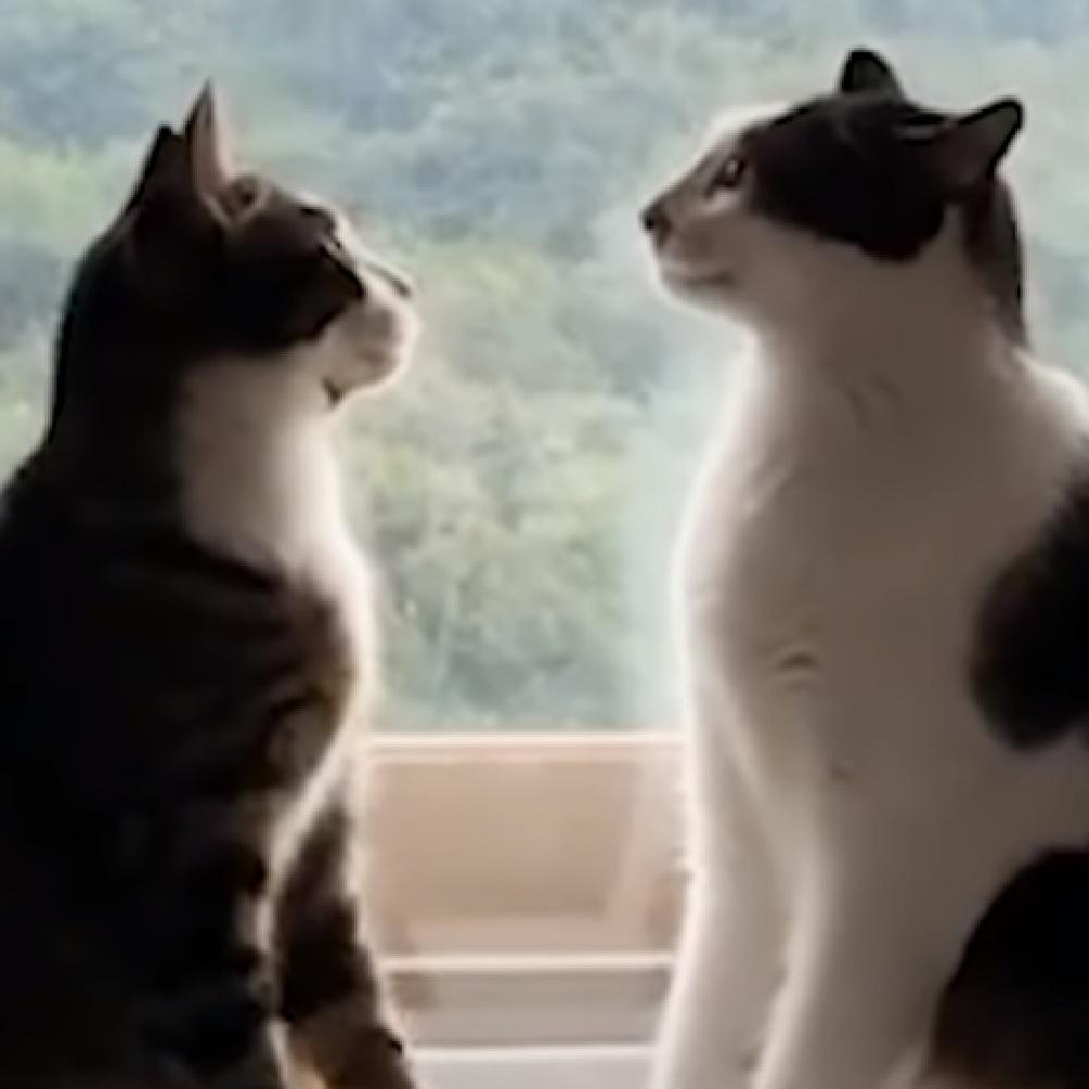 toast brunello gatti sana follia