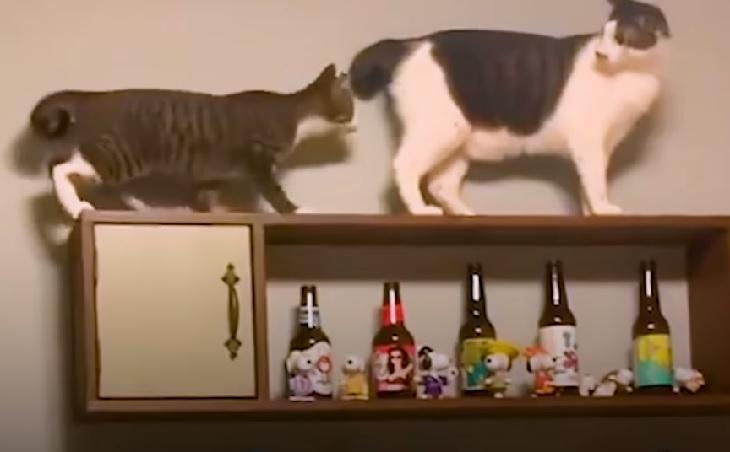 toast brunello gatti fratelli amore