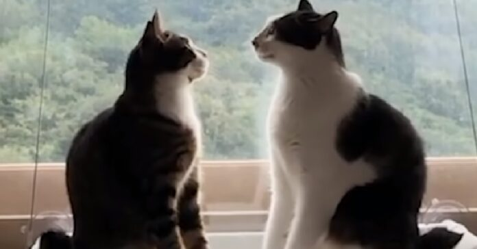 toast brunello due gatti decisamente esilaranti