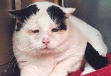 tuffy gatto salvato strada vive santuario