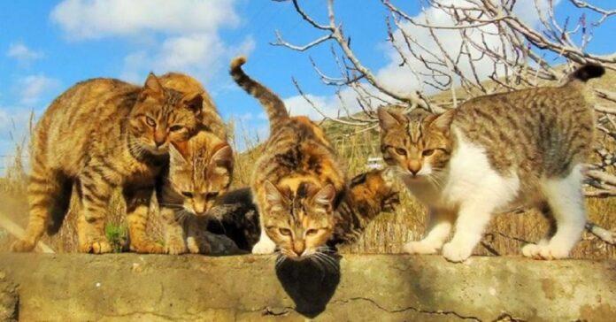 55 gattini foto