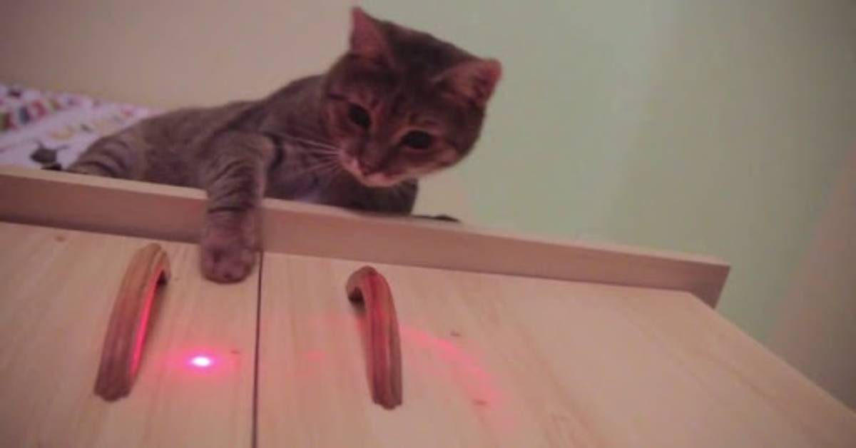 gatto grigio gioca con laser sul tavolo