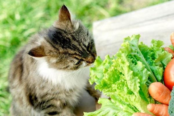 gatto odora verdure