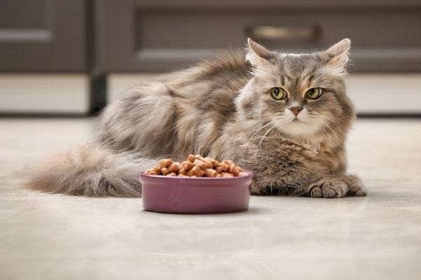gatto accucciato accanto a ciotola