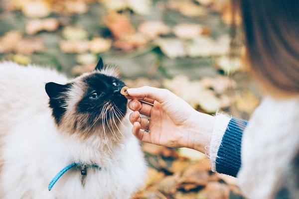 snack per il gatto