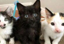 whitney gattina entra a far parte trio scoppiettante