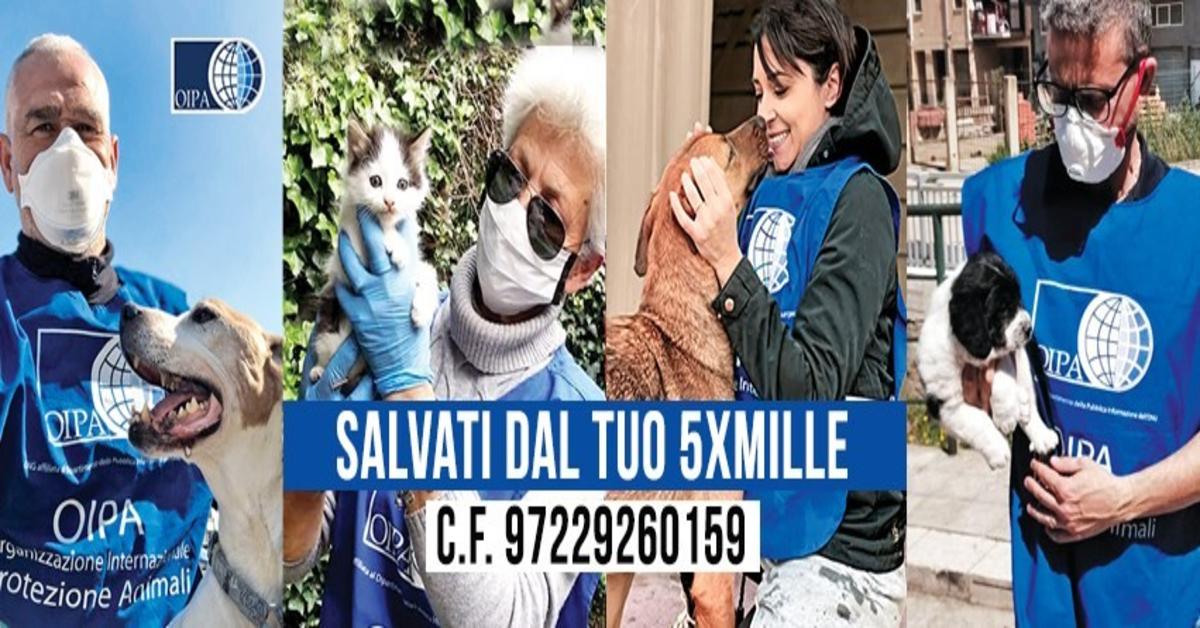OIPA Treviso