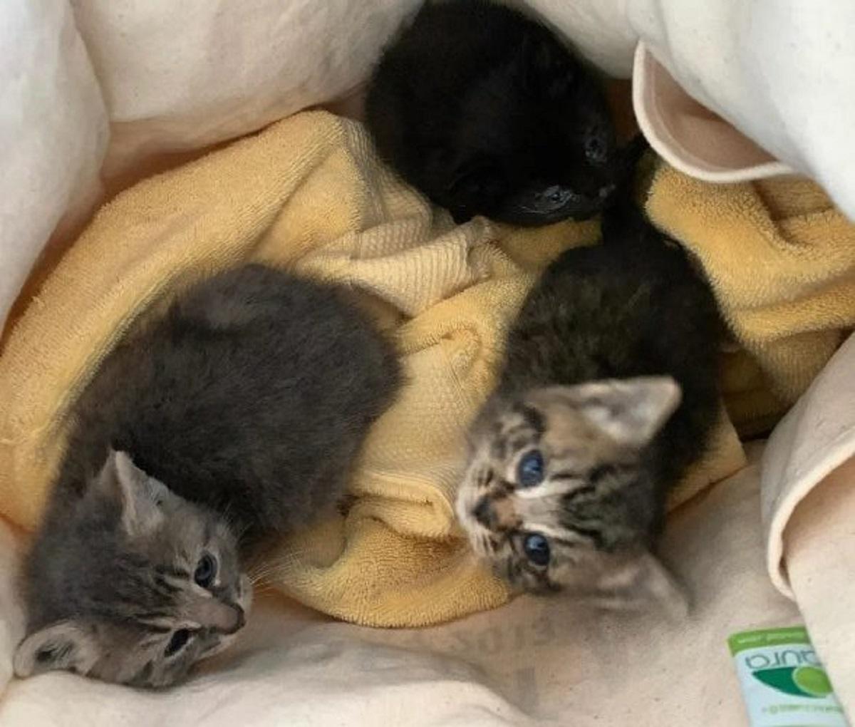 gattini trovati negoziante stanno magazzino