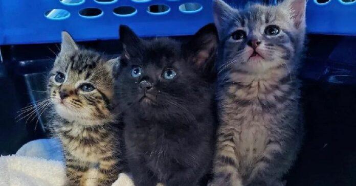 3 gattini salvati grazie a negoziante splendido gesto