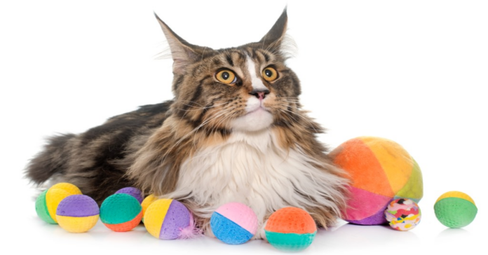gatto ostacoli tappi sughero
