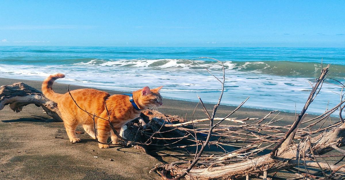 Ares cammina al mare al guinzaglio