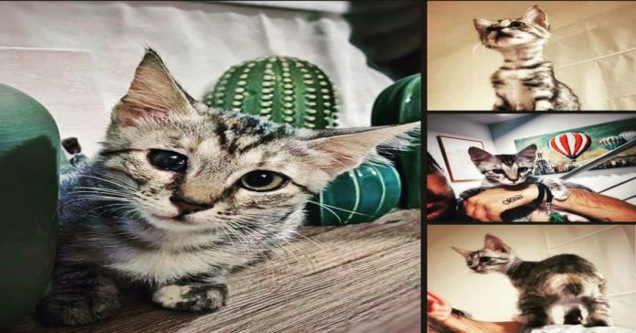 Maki collage micina da adottare
