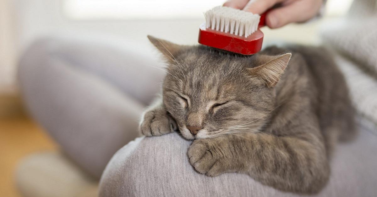 spazzolare il mantello del gatto