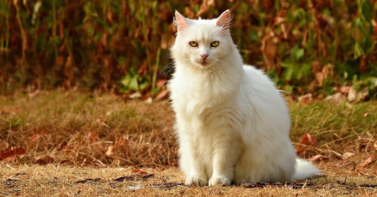 Gatto bianco che osserva