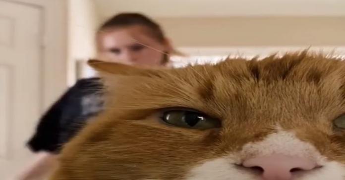 gatto si mette davanti alla telecamera mentre la padrona balla