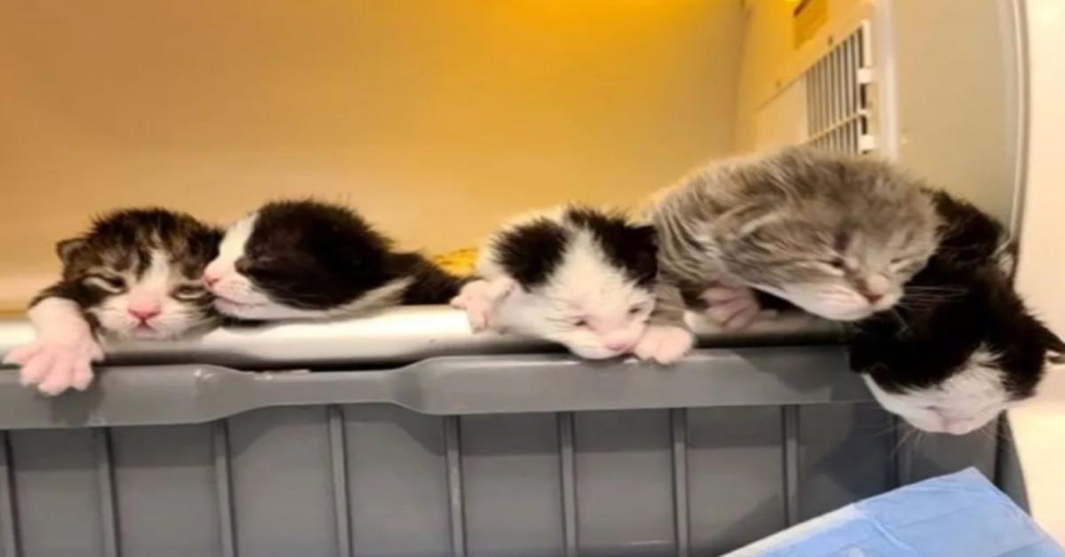 gattini appena salvati
