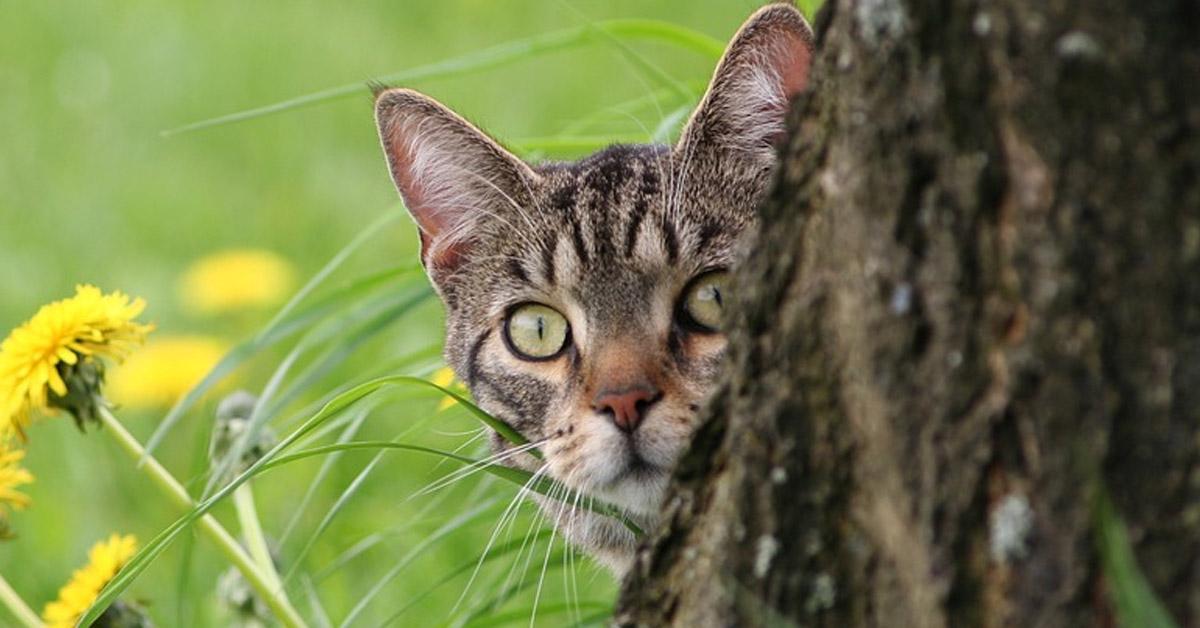 Gatto nascosto dietro ad un albero