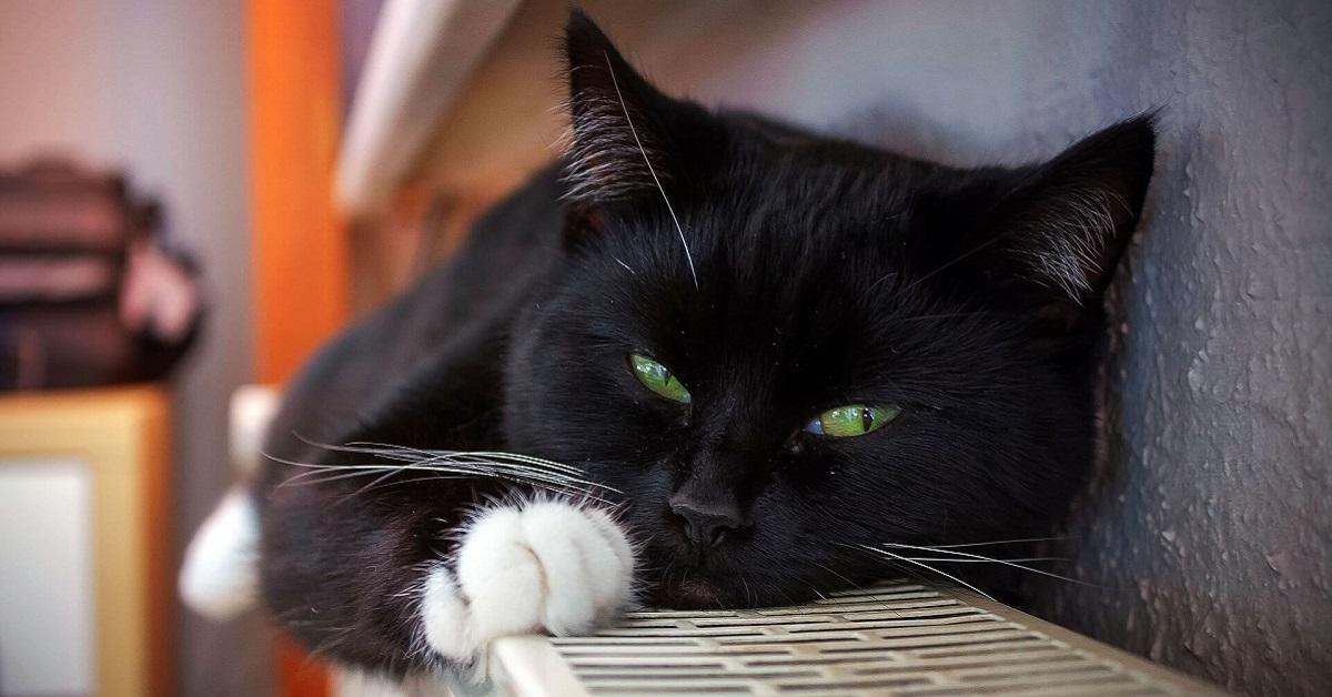 gatto in dormiveglia