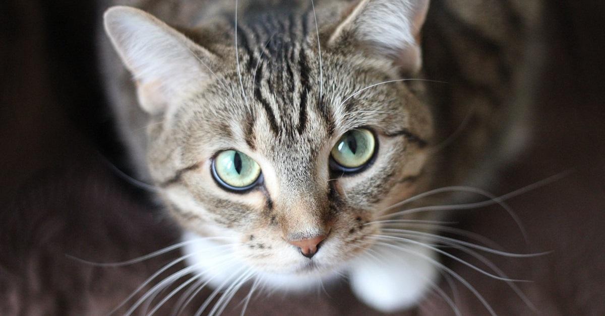 gatto guarda all'insù