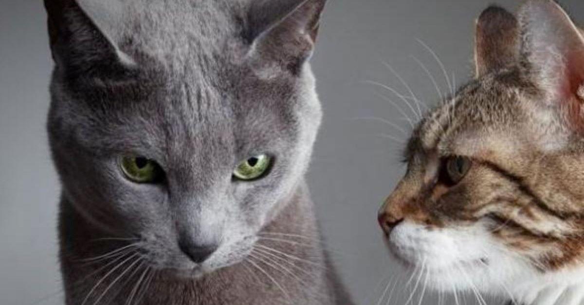 gattino litiga con tutti