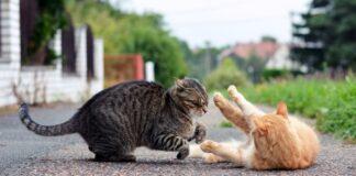 gattino che litiga con tutti