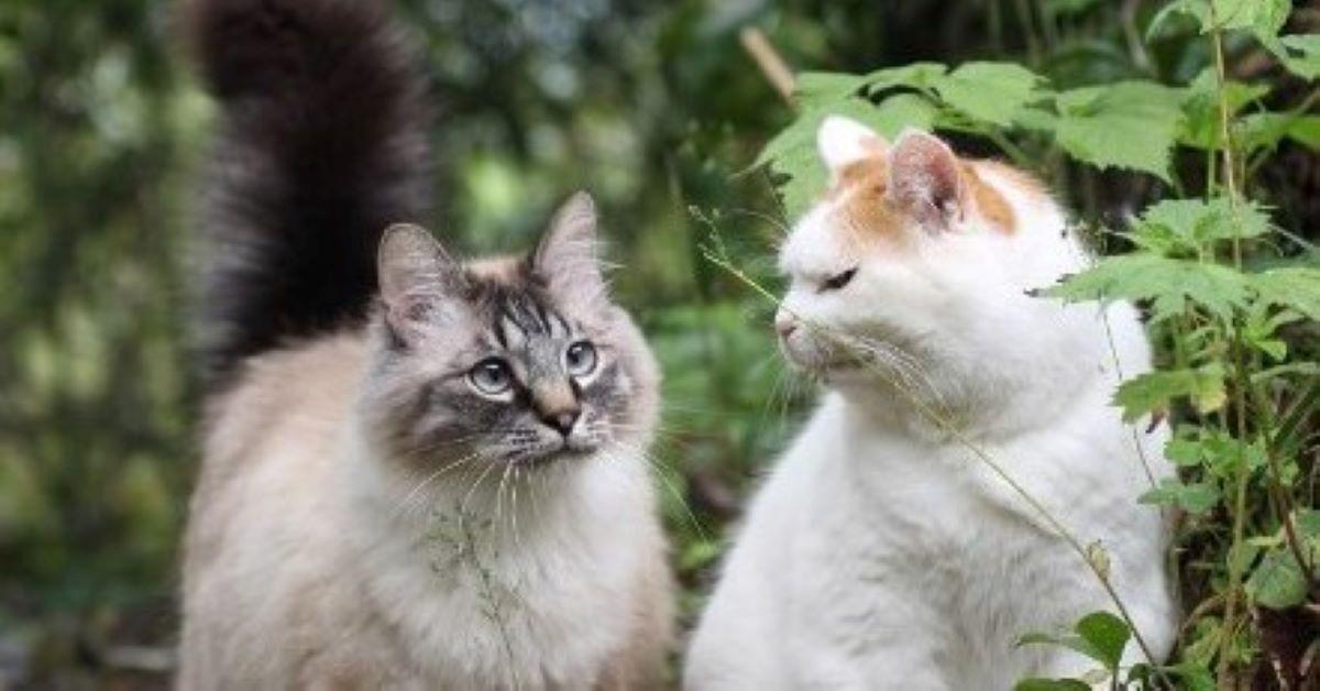 gattino che litiga sempre