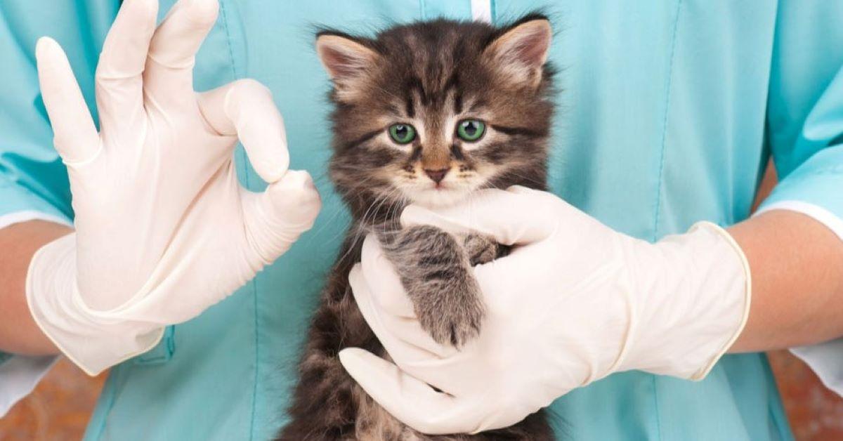 gatto adulto sterilizzare