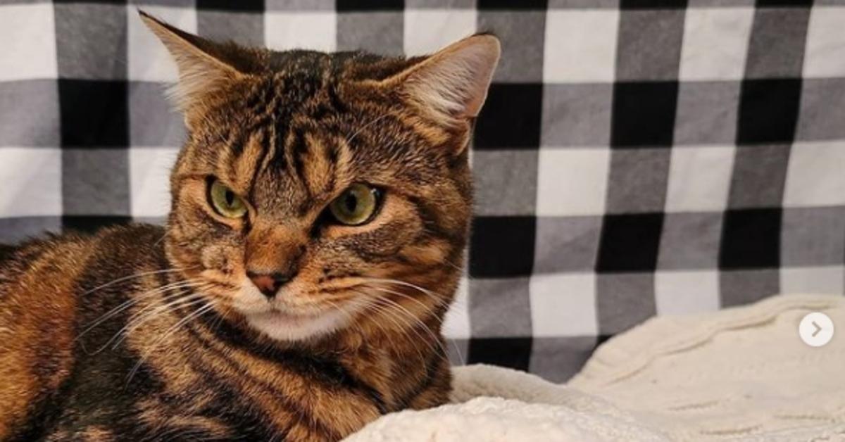 Giggles gattino Soriano arrabbiato
