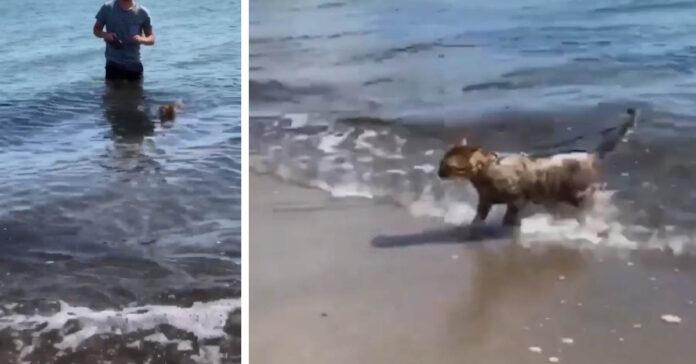 Gatto che esce dal mare