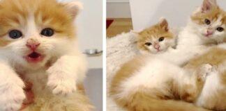 gattini soriano inseparabili