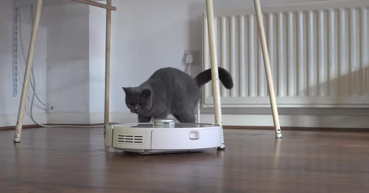 Gatto con aspirapolvere robot