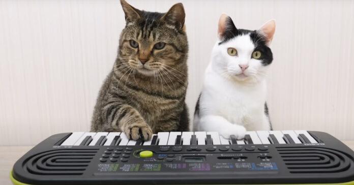 Gatti che suonano una tastiera