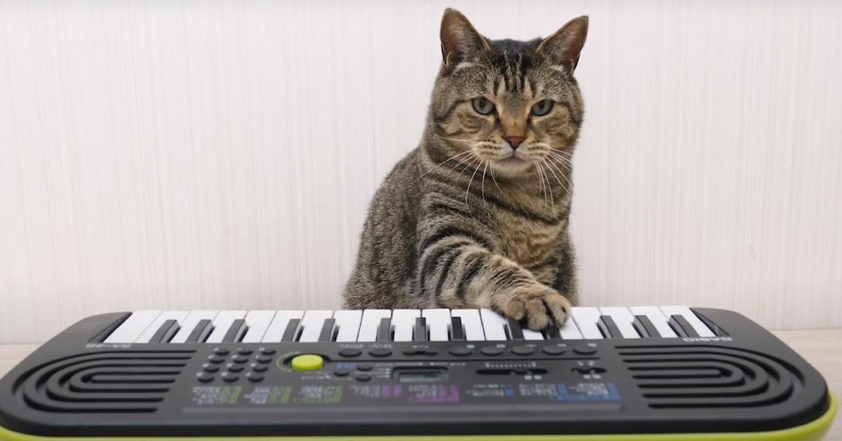 Gatto che suona una tastiera