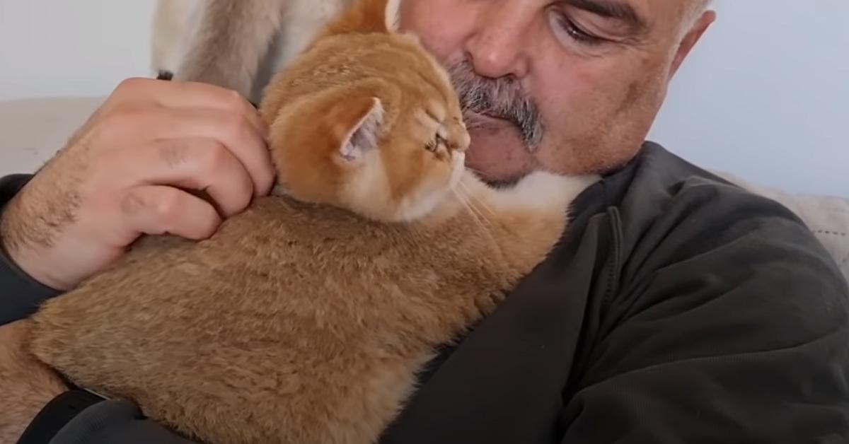 Gattini British Shorthair con il loro proprietario
