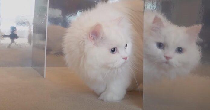 Gatto davanti ad uno specchio
