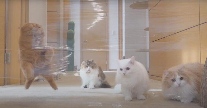 Gatti contro un muro