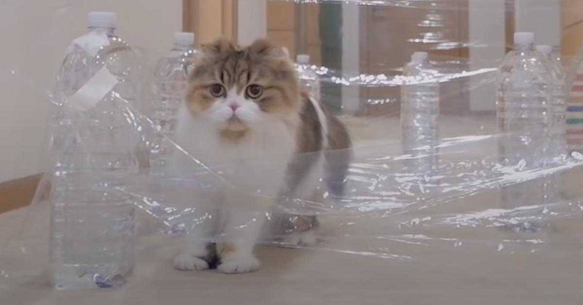 """Gatto contro un muro """"invisibile"""""""