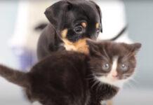 Gattino con un cucciolo di cane