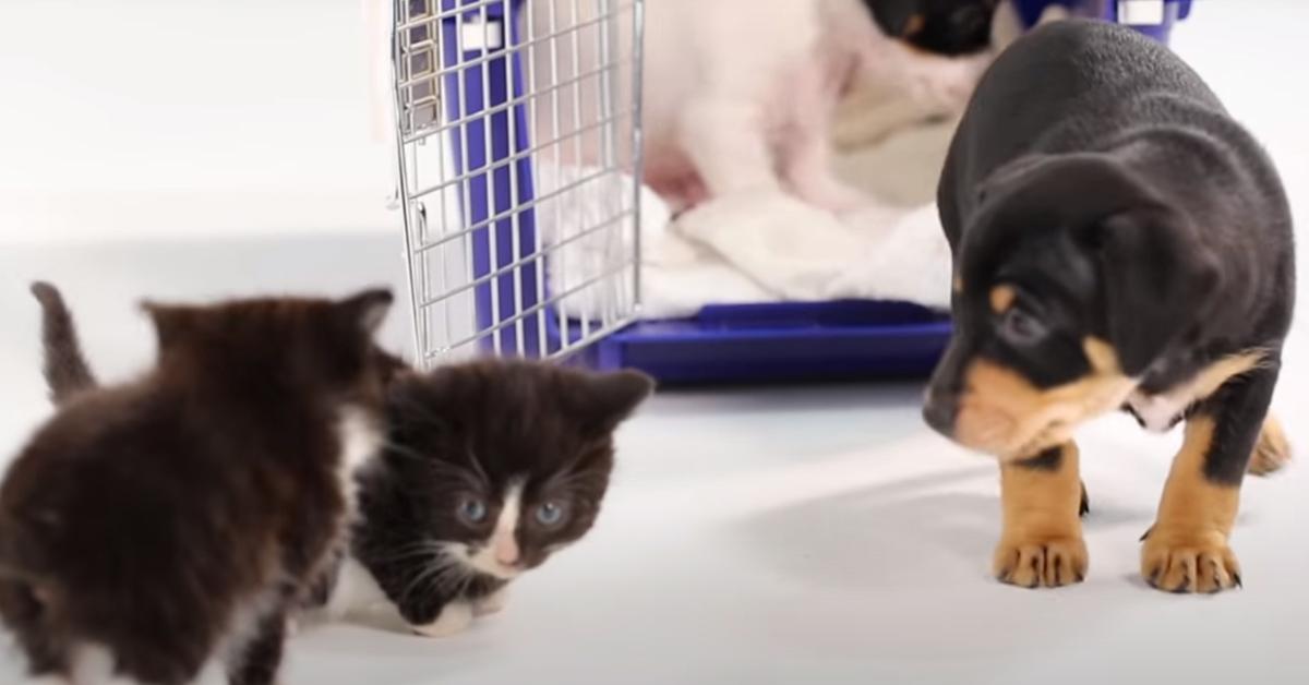 Gattini con un cucciolo di cane