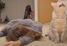 Gatto con ragazza sdraiata
