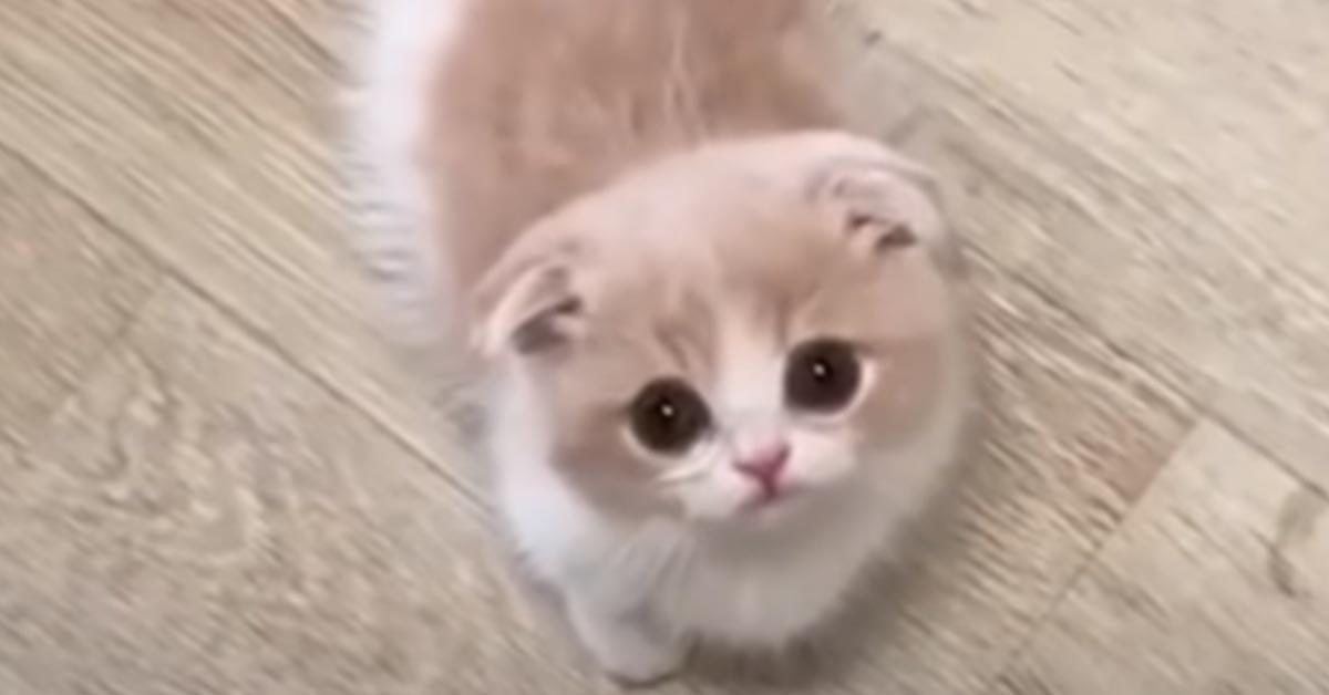 Gattino dolcissimo