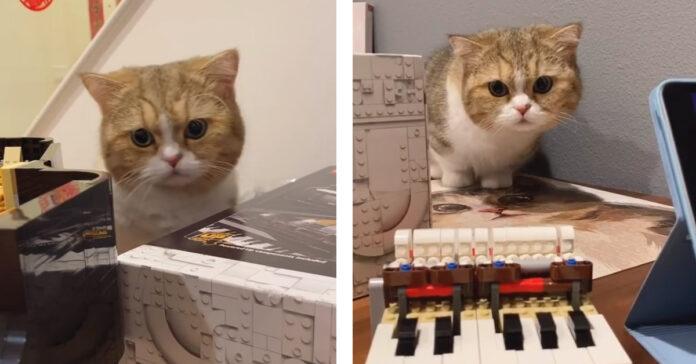 Gatto con costruzioni Lego