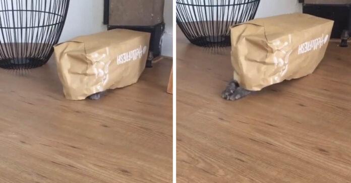 Gatto che prova a nascondersi