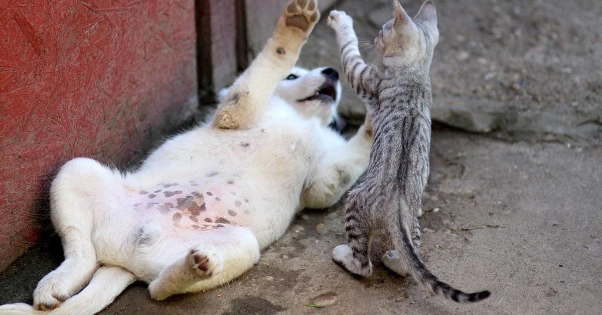 Gatto che gioca con un cane